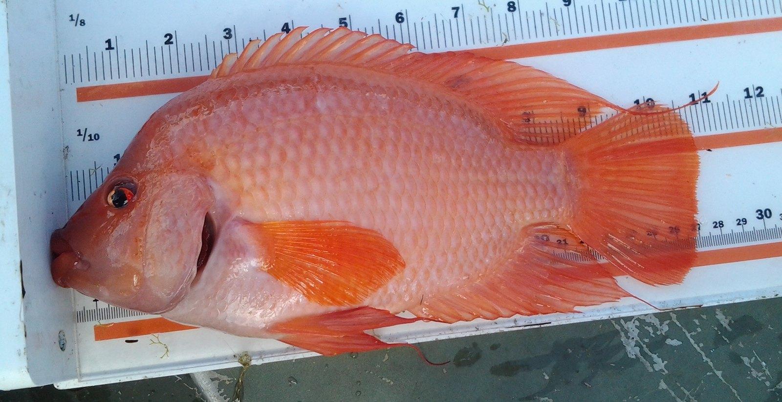 Fish Busters\' September 2014 | Flickr