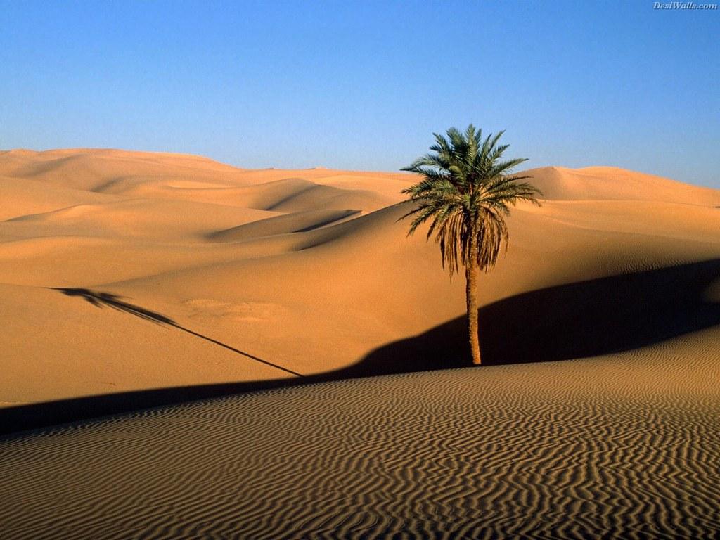 Фото и картинки природы египет