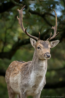 AWD-8387 | by Esther van Rooijen