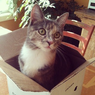 Typical. #catinthebox | by thespunmonkey