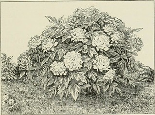 "Image from page 238 of ""Lawns and gardens. How to plant and beautify the home lot, the pleasure ground and garden"" (1897) 