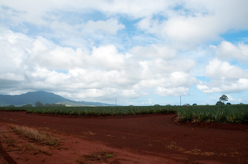 dole pineapple fields | by KelliCampbell