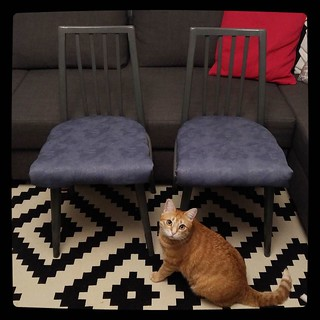 Furniture upgrade for #kuzzzmahomesweethome: 2 chairs, after + Roger, cat in residence. Paintwork will be updated when I'll pick up exact blue-grey shade for kitchen accent wall.