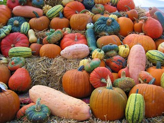 Pumpkins | by Hannelore_B