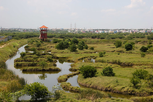 Pasturelands, grasses and shrubs are essential components of Chennai's landscape. Pictured here is a portion of the Pallikaranai marsh.