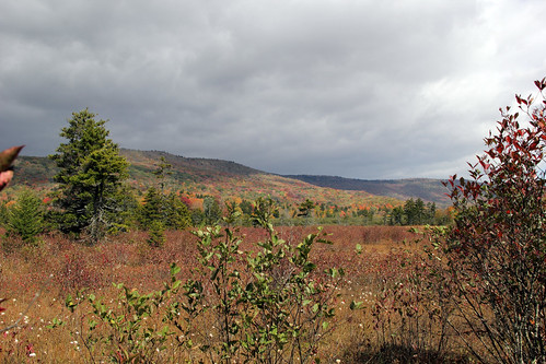 20141004_Cranberry_Glades_006 | by Random Michelle