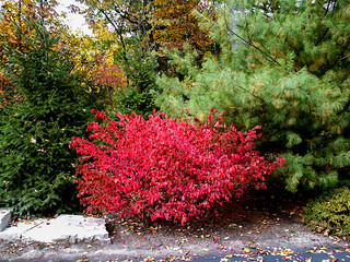 Fall colors 2005 | by Tigra K