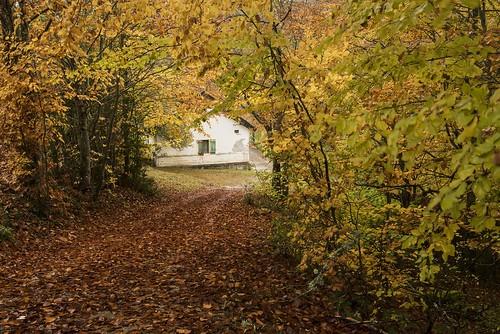 La casita del bosque carmen solla flickr - Casitas del bosque ...