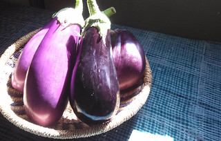 dramatic eggplant | by Green Mountain Girls Farm