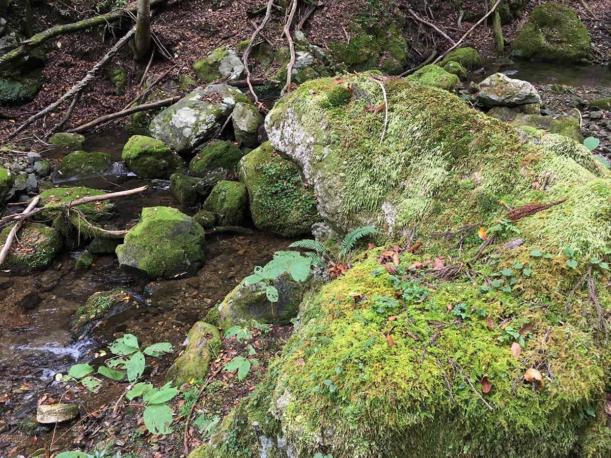 コケの生い茂る石