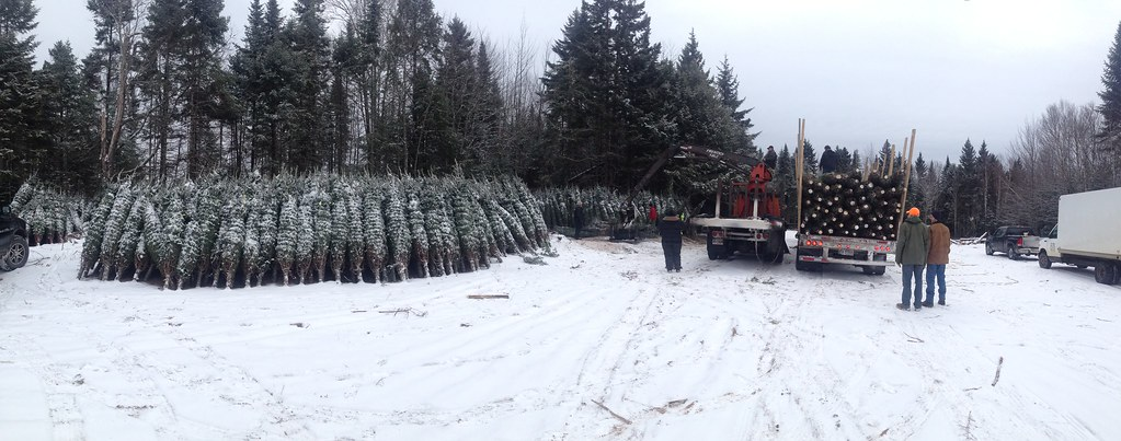 hilltop christmas tree farms by hilltop christmas trees - Hilltop Christmas