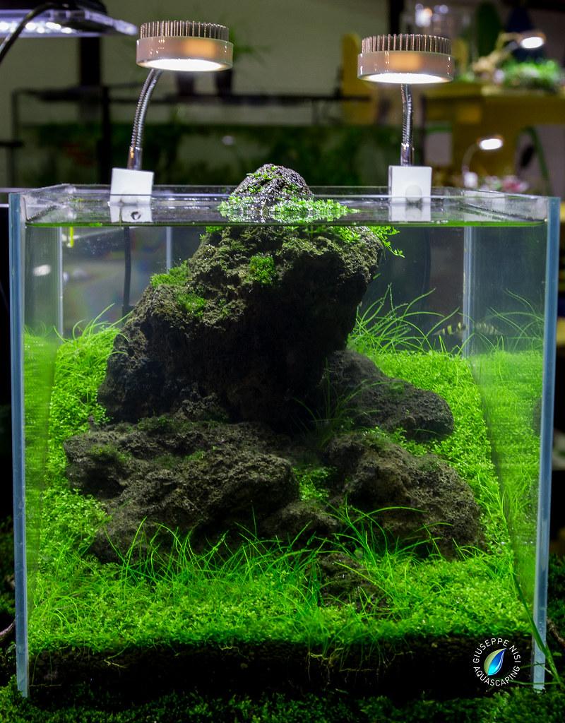 nano cube 25 25 25 expo final shot vasca 25 25 25 extrach flickr