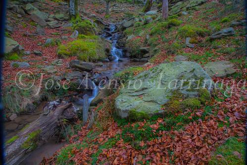 Parque natural de Gorbeia #DePaseoConLarri #Flickr      -2081