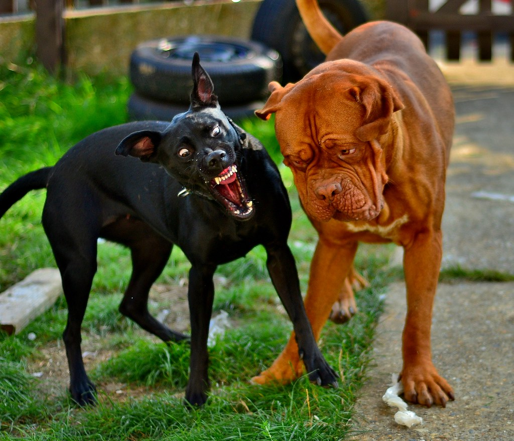 4 Fool-Proof Ways To Identify An Aggressive or Rabid Dog