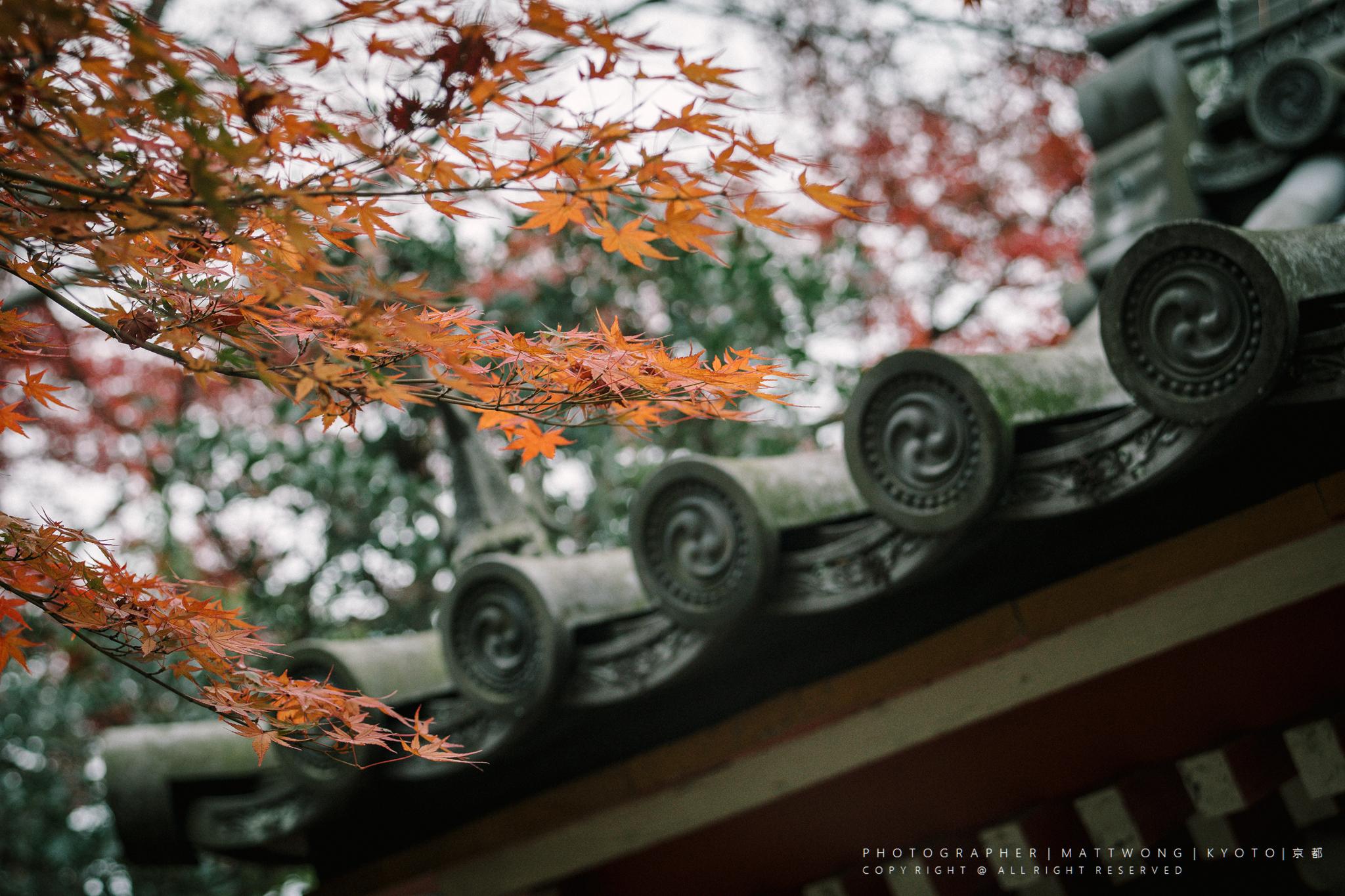 日本花之蛇图片