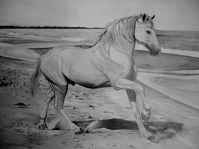 desenho realista cavalo na praia carlos damasceno flickr