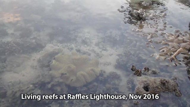 Living reefs at Raffles Lighthouse