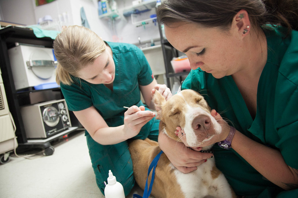 veterinary tech classes