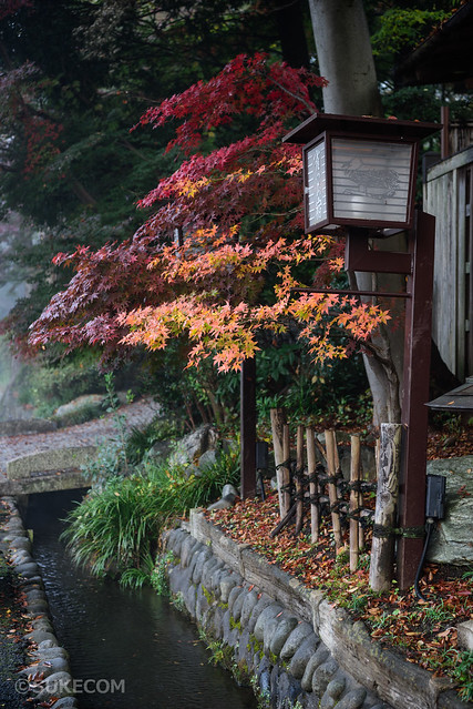 深大寺の紅葉が見ごろ