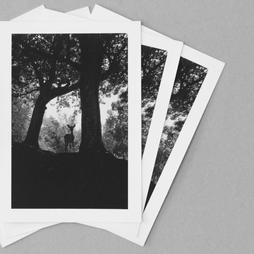 Dear deer - a new print fresh from my darkroom. See shop link in... | by tiinateaspoon