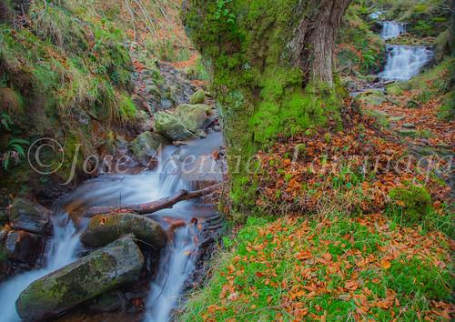 Parque natural de Gorbeia #DePaseoConLarri #Flickr      -2018