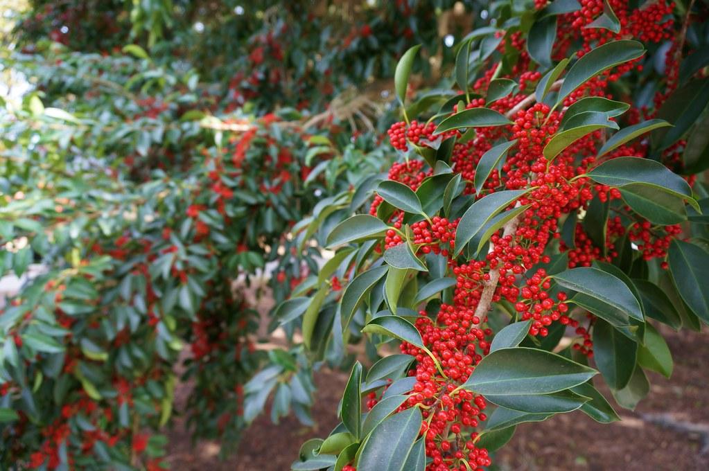 Coastal Georgia Botanical Gardens Flickr