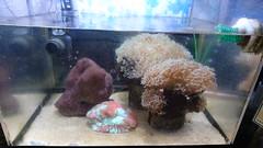 水産センター・サンゴ
