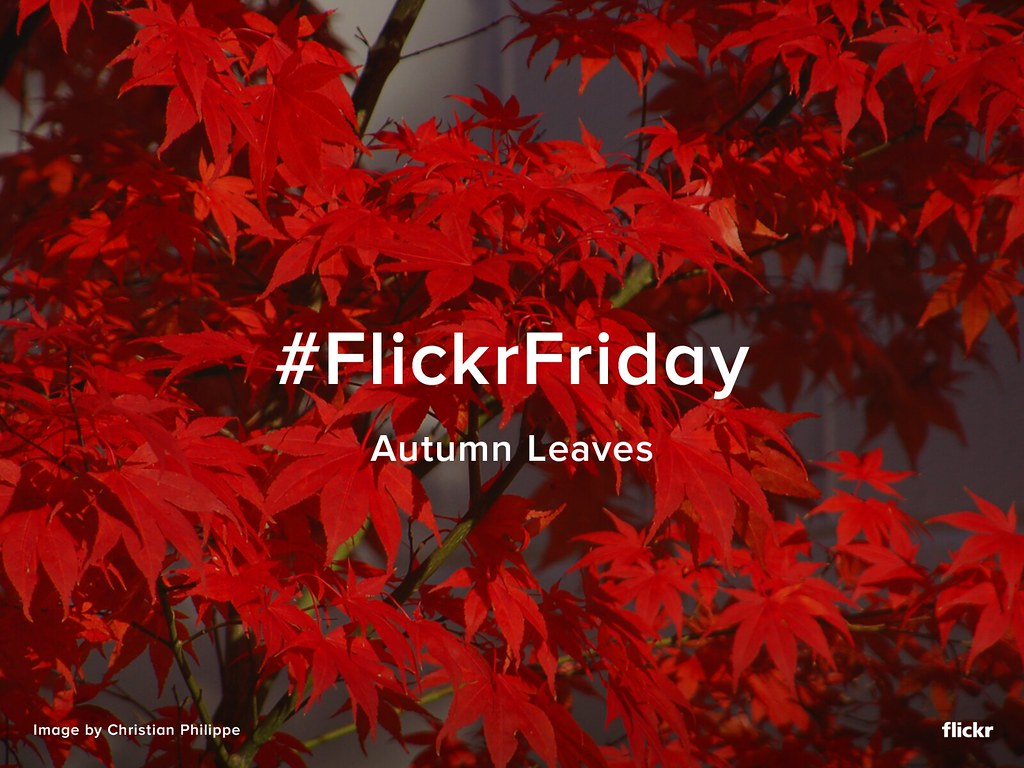 flickr friday autumn leaves