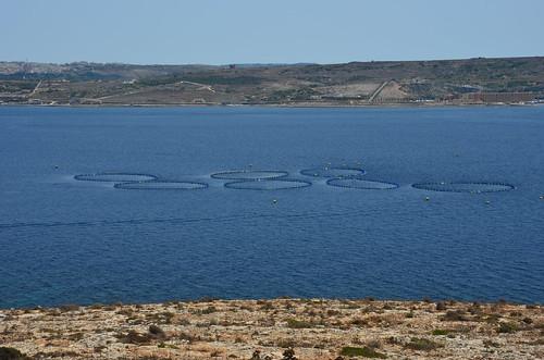Die kreisrunden Fischgehege zur Zucht von Speisefischen.