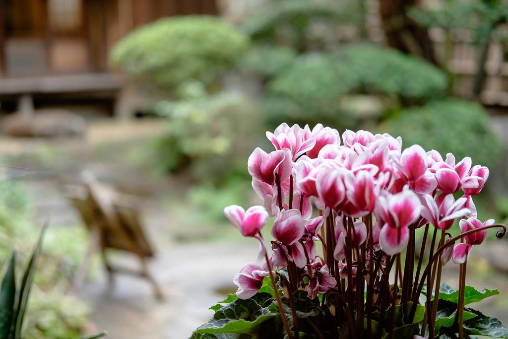 Garden at Kosoan in Jiyugaoka | Leng Cheng | Flickr