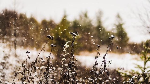 2016 11 30 Snowy Day 005