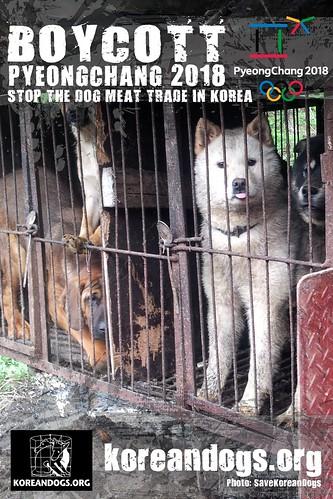 Boycott Pyeongchang_1440x2160_g-2