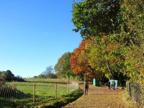 Glorious Fall Morning in Hampstead Heath