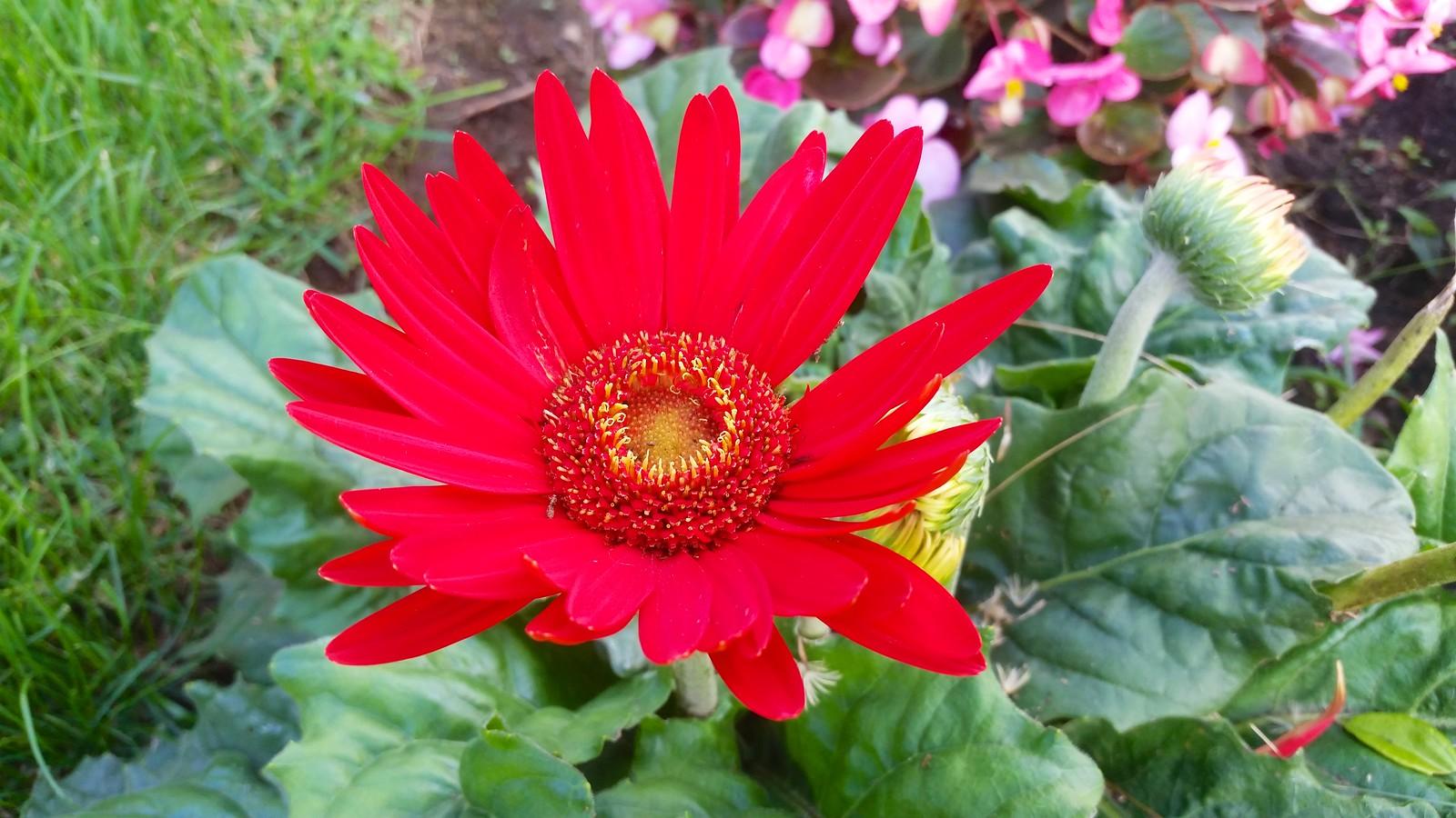 Pretty red flower joe shlabotnik flickr mightylinksfo