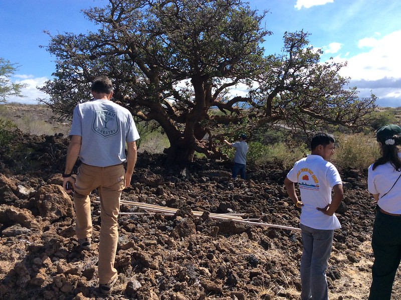 Pacific Islands Forestry Committee Field Tour of Waikoloa 10/25/16
