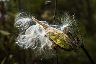 Gone to Seed | by PopsDigital