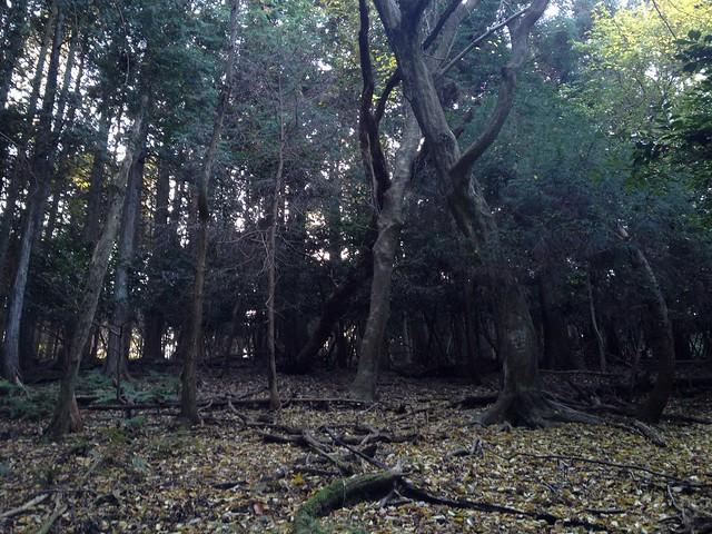 朝倉山 真禅院ルート 山頂部