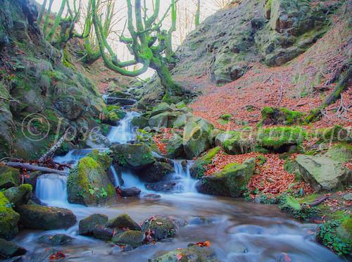 Parque Natural de Gorbeia   #DePaseoConLarri #Flickr      -2784