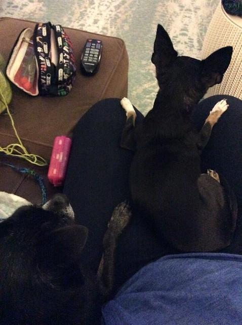 My lap