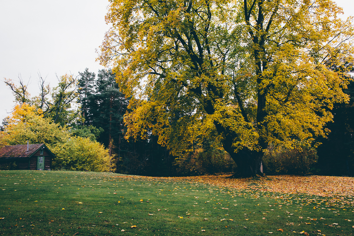 Autumn | Cashew Kitchen