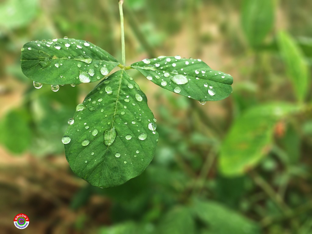 drop wet leaf rain growth nature water plant green color c flickr