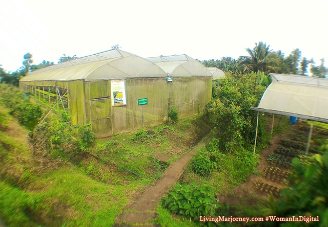 Costales-Farm-Joint-Venture-Greenhouse