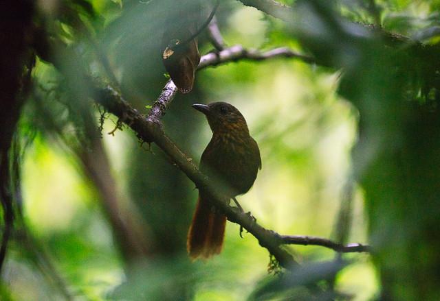 161113_REE_Monteverde_Reserve_35
