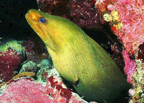 green moray eel vacation activities with  key west sailing adventure | by keywestsailingadventure