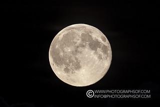Moon (19 photos)