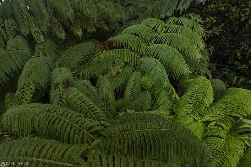 Green - Big Island