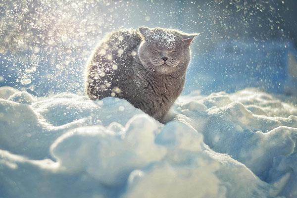 Все прелести зимы - ПоЗиТиФфЧиК - сайт позитивного настроения!