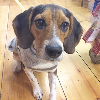 Ollie flashed us those big brown eyes and we were ready to give him all the treats,  what a sweetie! #thefishandboneportland #portland #maine #dogsofinstagram | by The Fish & Bone - Portland