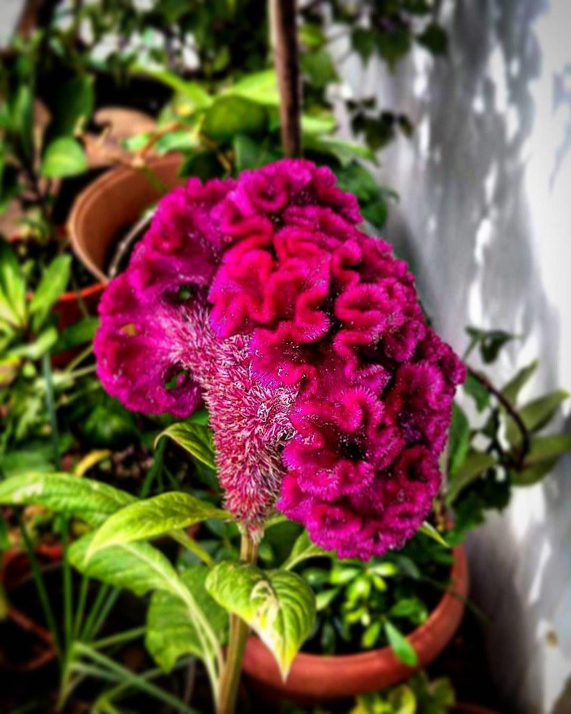 Shot with galaxy mini flowers flower toptag flickr shot with galaxy mini flowers flower toptags top izmirmasajfo