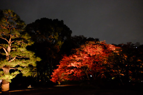 RIKUGIEN Colored Leaves light up 2016 03